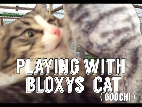 Playing with Bloxys cat!