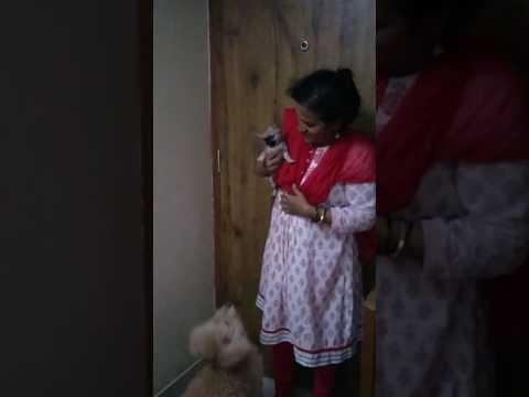 Bouncing Dog /Jumping Dog /Crazy Dog