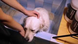 Моя собака. Как мыть, подстригать когти и чистить уши собаке.