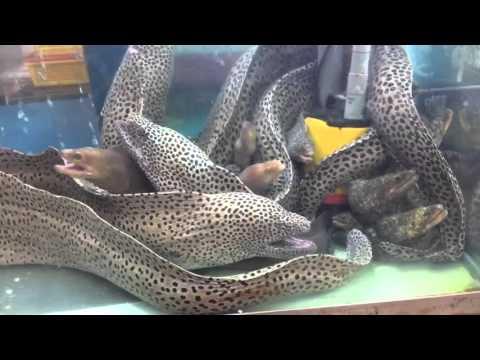 Keelung Seafood Market