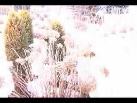 Growing at Reiman Gardens 014 Winter Interest