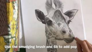 How to draw a realistic giraffe