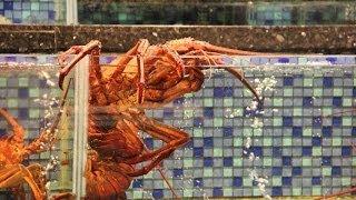 Живые креветки и лобстеры в рыбных ресторанах Гонконга(Зимой прошлого года мы посетили азиатский мегаполис Гонконг, а также китайский Лас-Вегас -- город-государст..., 2014-03-06T10:57:29.000Z)