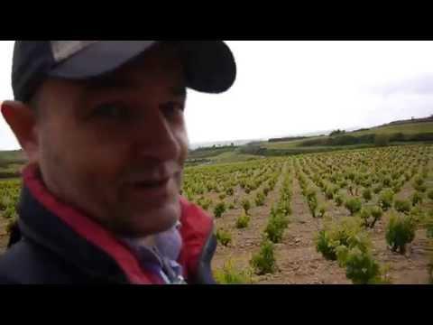 Entre viñedos en la Rioja Alavesa