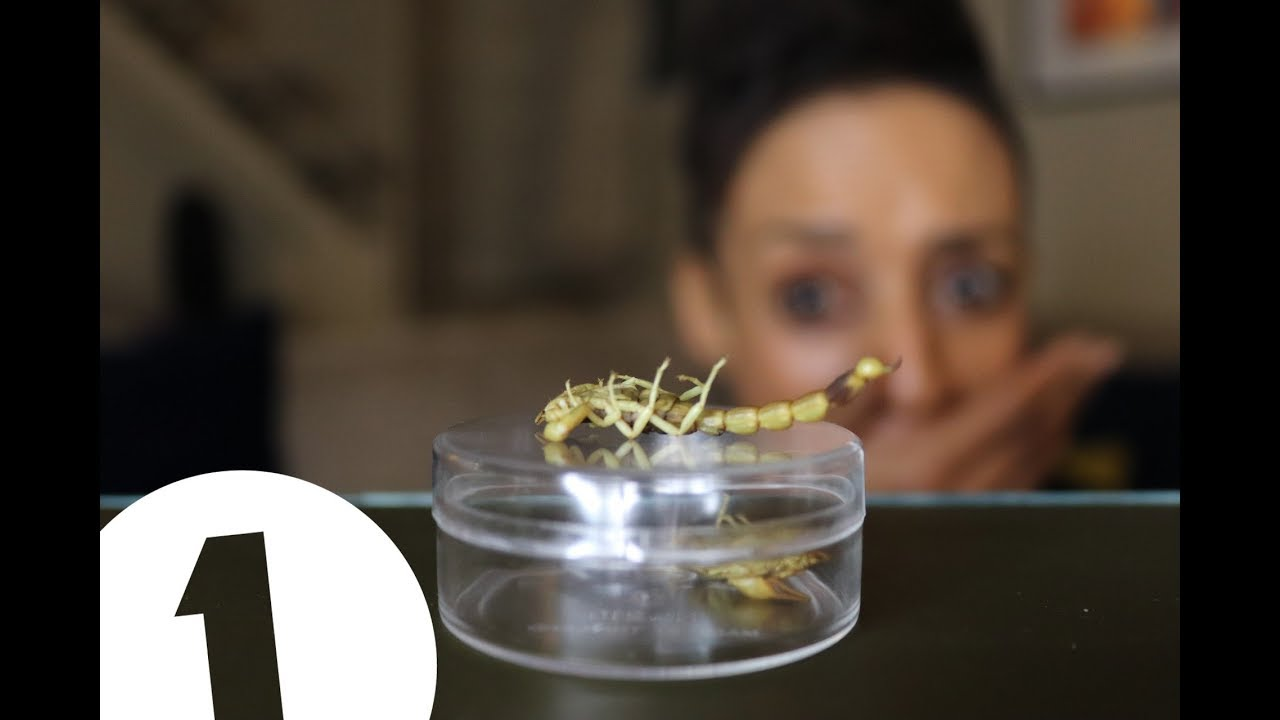 Eating insects - cover