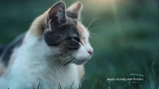 Особые знаки Приметы о кошках и собаках