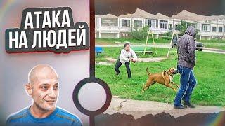 видео Агрессия к другим собакам(Кокер-спаниель)