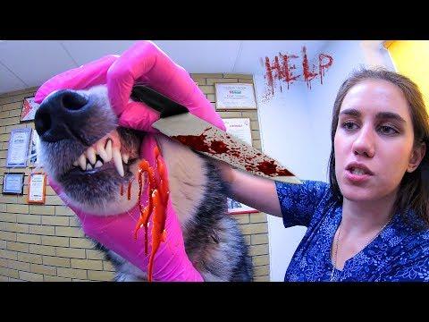 ВЛОГ: СТЕРИЛИЗАЦИЯ СОБАКИ / спасение животных / ветеринарная клиника Доверие Харьков