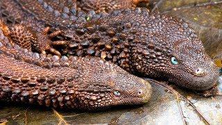 DRAGONES DE LA VIDA REAL. 9 ANIMALES QUE PARECEN DRAGONES