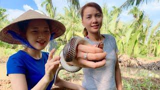 Vlog 64|Liều Mạng Tay Không BẮT RẮN Vào Làm Đặc Sản Miền Tây| Hồ Thùy Dương Vlog