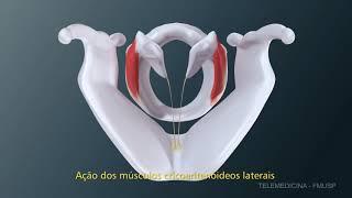 Biomecânica da musculatura intrínseca da Laringe