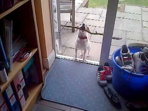 Dog Can T Get Stick Through Door