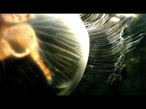 Carbon Based Lifeforms - Abiogenesis