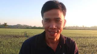 Bón Phân Cho Lúa Ngay Sau Khi Gieo Sạ