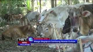 Warga Singapura sumbang hewan kurban di Bondowoso - NET12