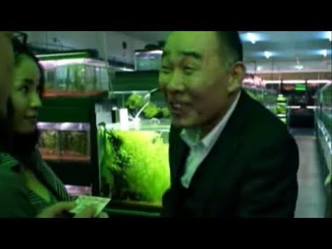 『冷たい熱帯魚』 予告編