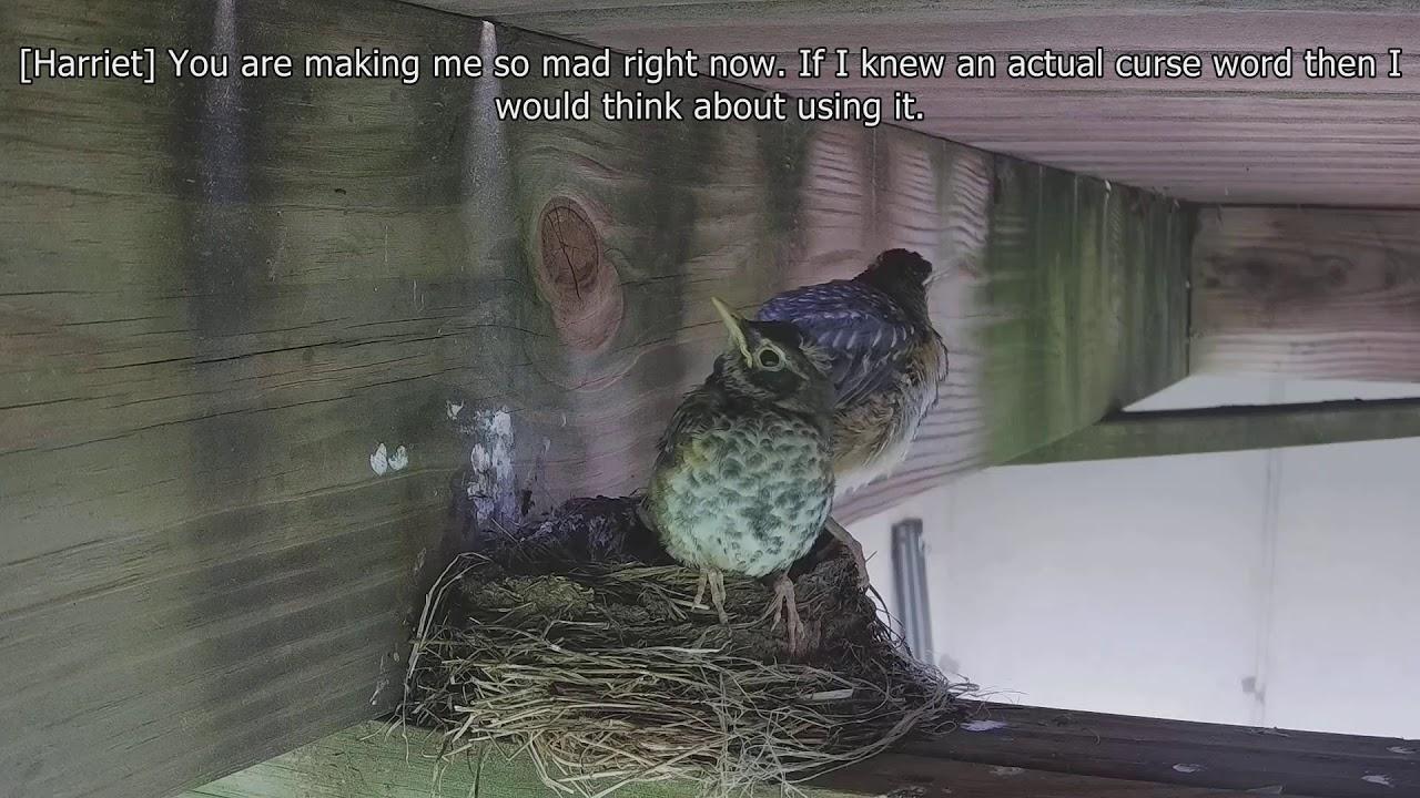 Baby bird leaving nest (3 of 4) - YouTube