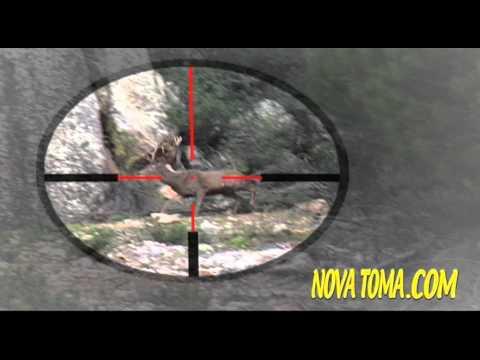 Vídeos Caza, MONTERIAS EN CASTILLA (parte 4). Hunting Video