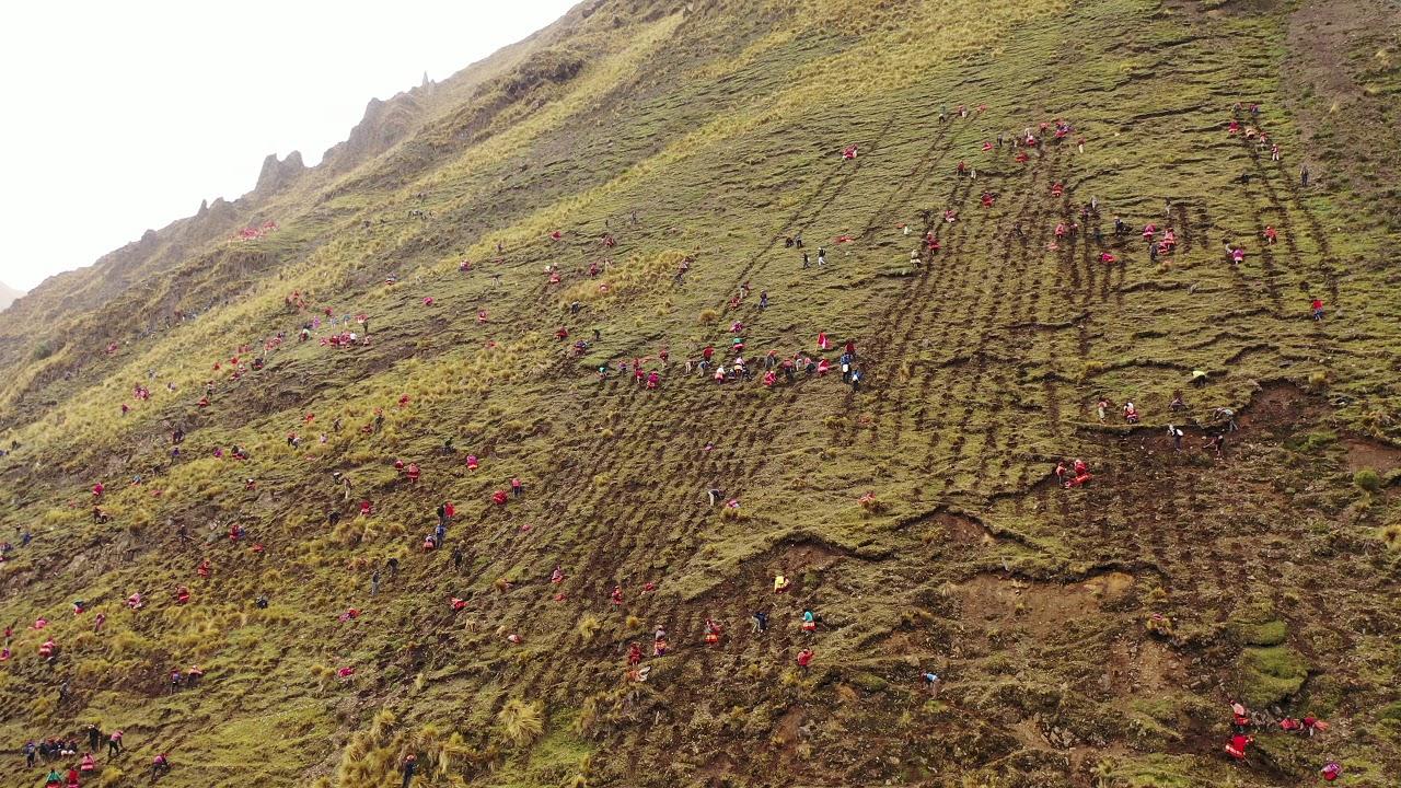 #AccionAndina - Massive reforestation in the Andes
