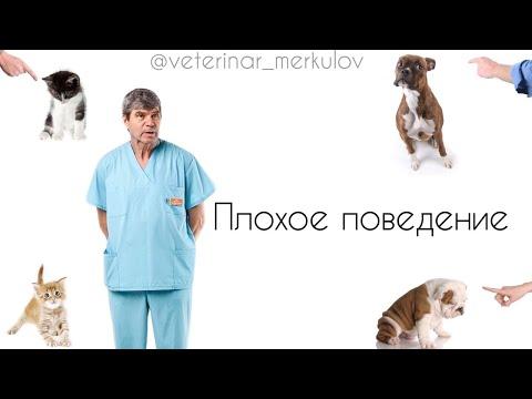 Плохое поведение животных//МЕРКУЛОВ Ф.Н. ветеринарный врач