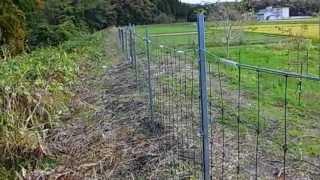 北陸には存在しなかったイノシシに翻弄されている百姓・・・電気柵の後...