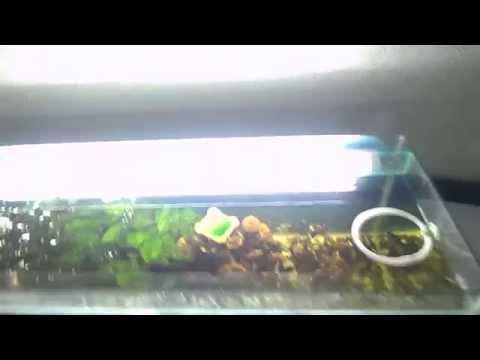Смотреть онлайн Как сделать свет (подсветку) в аквариум .How to make a light (illumination) in the aquarium.