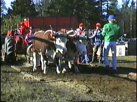 Yarmouth Ox Pull 1990