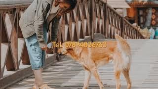 Dog walking  in Wokingham