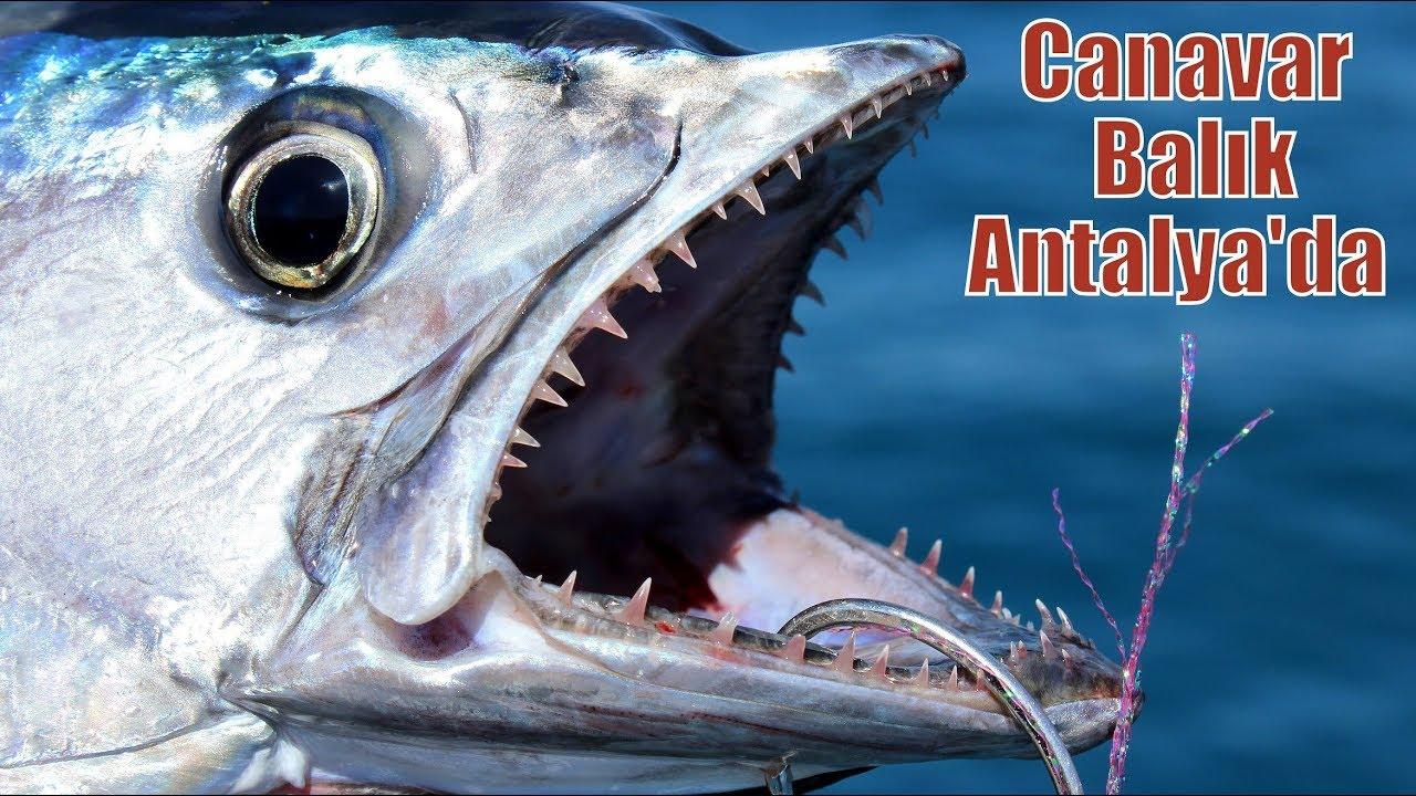 Antalya'nın Kayıp Canavarını Yakaladık / Monster Fish !!