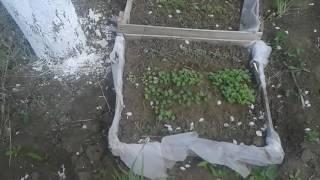 Мобильные грядки(салат,руккола,кориандр)