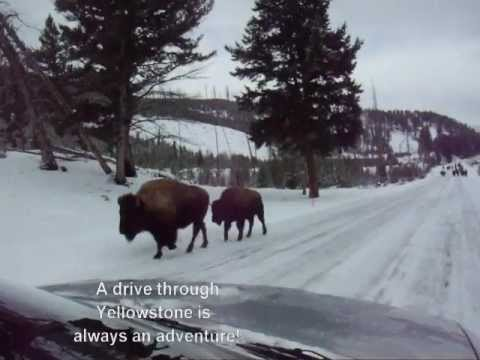 "Driving Through Yellowstone in the Winter feat. ""Attitude"" by Kokorupt"