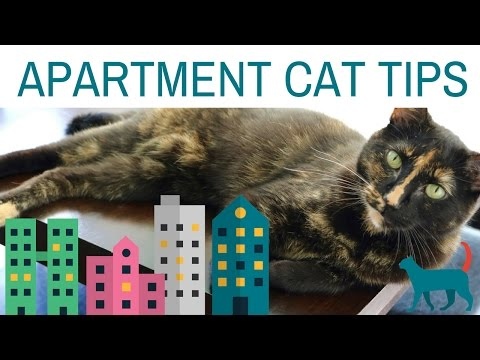 5-apartment-cat-tips!-(tips-for-enriching-your-cat's-environment)