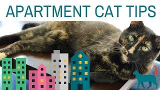 5  APARTMENT CAT TIPS! (tips for enriching your cat