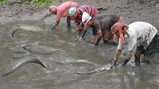 Amazing! Rainy Day Village People lot of Fish Catching by Hand in the ...