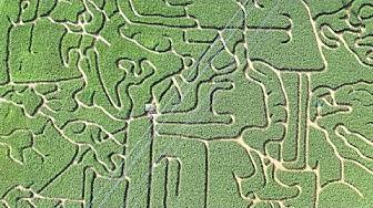 Maislabyrinth Hessen