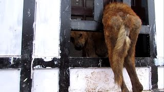 Terrified dog stuck in gate rescued