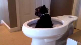 Potty Training Nikki