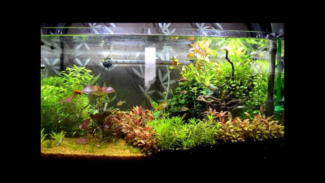 aquarium komplett set 110 l aa aquarium inkl pumpe lampe u filter bunte. Black Bedroom Furniture Sets. Home Design Ideas