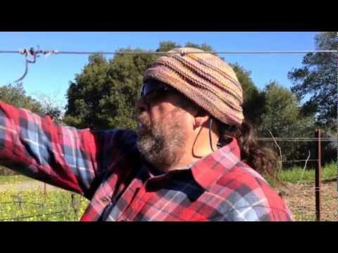 Dos Limones Explained with Organic Grape Grower Phil Coturri
