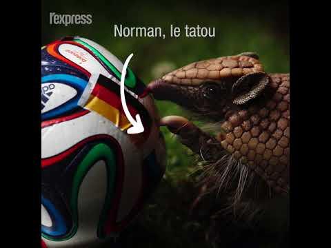 Achille, pronostiqueur officiel de la Coupe du monde de football en Russie