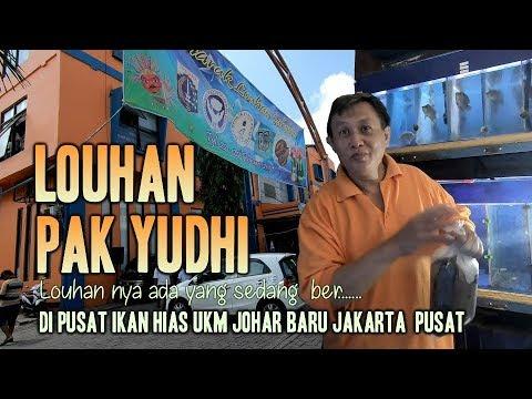 Louhan Pak Yudhi  UKM Johar Baru Jakarta