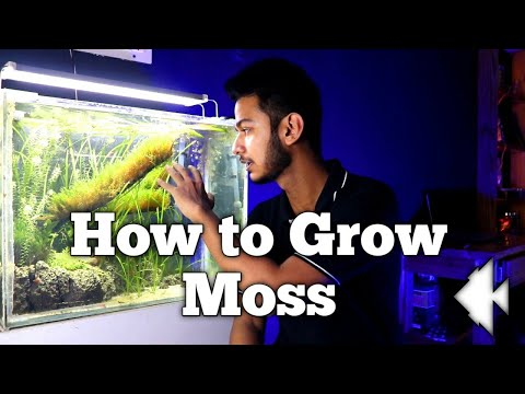 Moss Guide / All About Moss