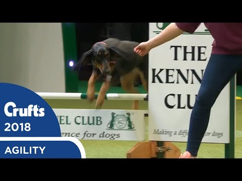 Rescue Dog Agility | Crufts 2018