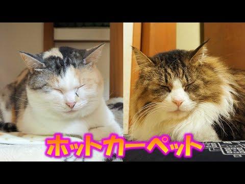 猫達のホットカーペット Cat's hot carpet