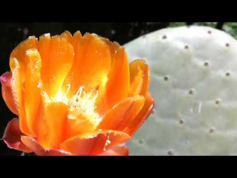 Big Sur Succulent Garden