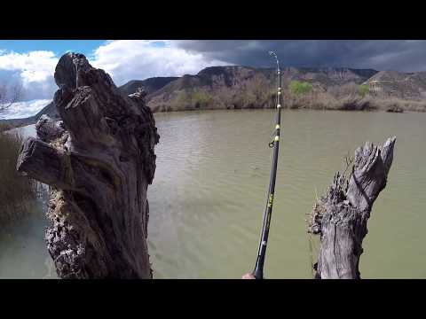 MONSTER Catfish (Siluro) - 2.52 Metres (8 Ft 3 Inches) - 200 Lbs (Weighed!) - Fishing - River Ebro!