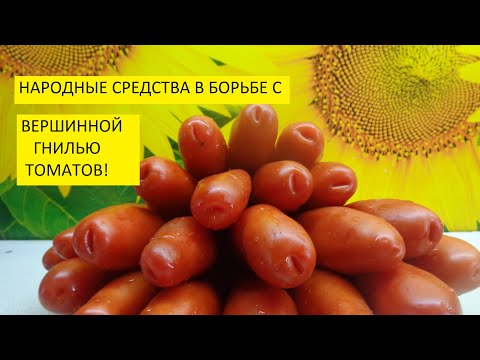 ЗОЛА В БОРЬБЕ С ВЕРШИННОЙ ГНИЛЬЮ ТОМАТОВ. Ольга Чернова.
