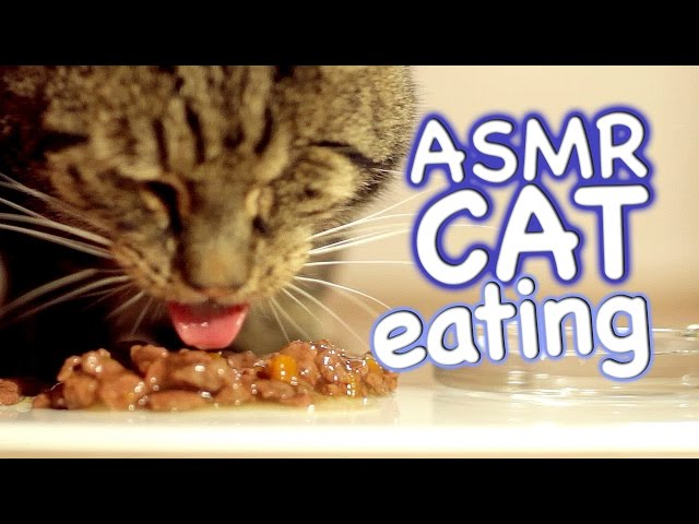 ASMR Cat - Eating #4