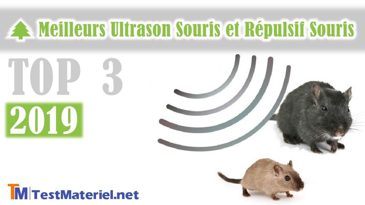 Huiles Essentielles Contre Les Souris ?? ▷ meilleurs ultrason souris rat : mes tests et