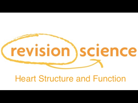 Heart structure and function - YouTube